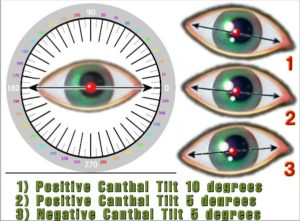 Canthus Chart for Eye Shapes